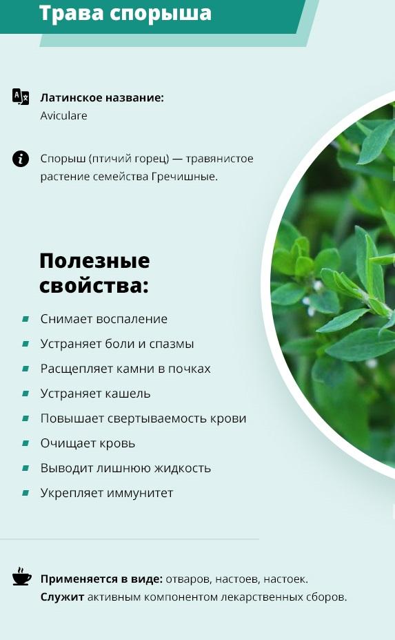 Горец птичий. Полезные свойства травы, применение и противопоказания
