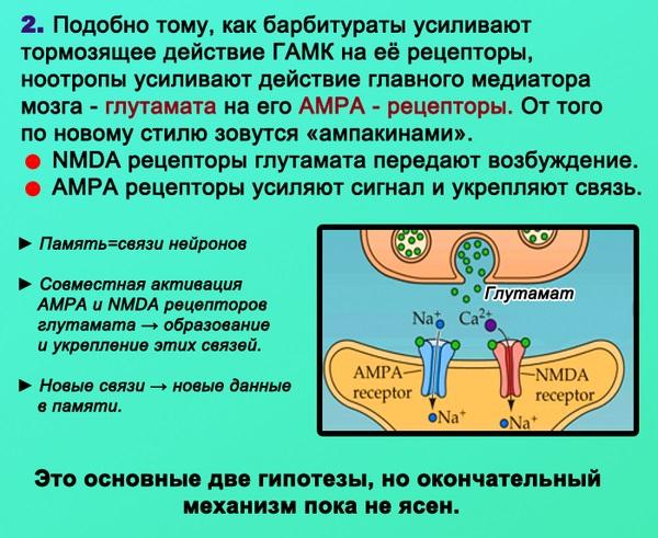 Лекарство для памяти и внимания. Как улучшить, восстановить, укрепить. Народные средства, препараты
