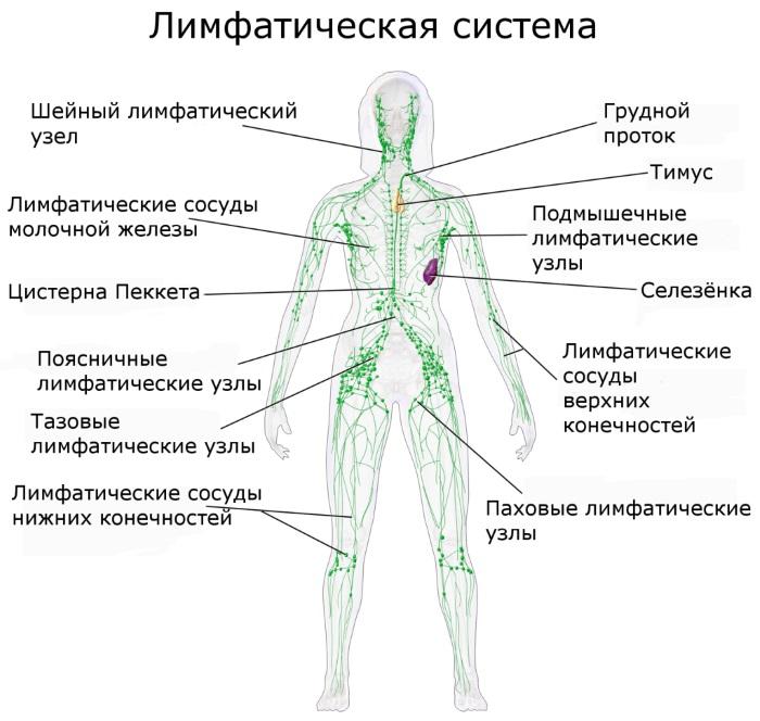 Лимфомиозот. Инструкция по применению для детей (ампулы, уколы, раствор). Цена, аналоги