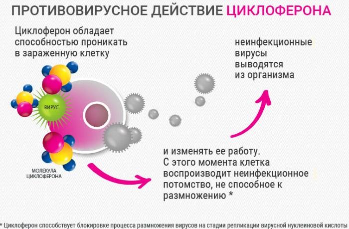 Циклоферон. Инструкция по применению таблетки взрослым. Цена, аналоги