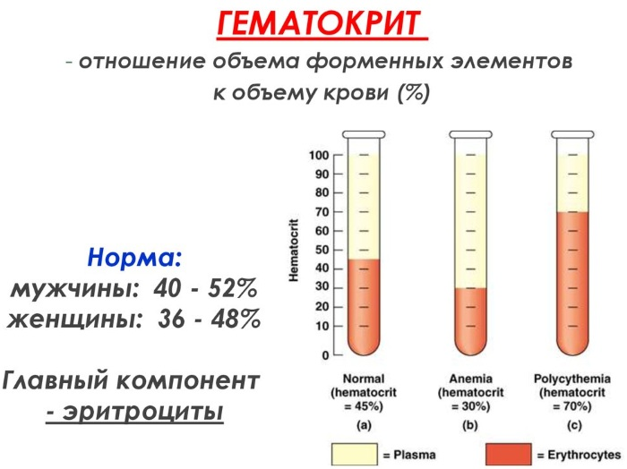 Общий анализ крови. Норма по возрасту, полу у взрослых, детей. Расшифровка результатов