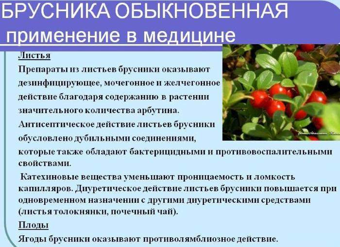 Брусника. Лечебные свойства, применение в народной медицине. Противопоказания