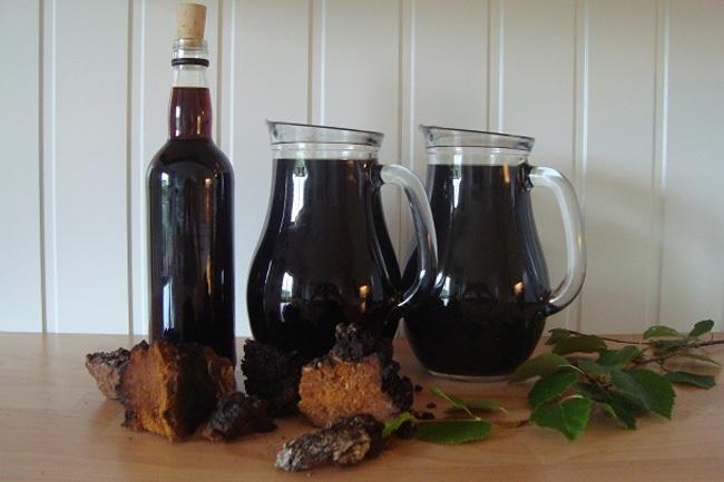 chaga lechebnye svoystva 4 - Chaga birch mushroom useful properties and application