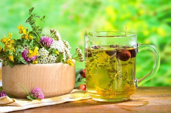 Зимолюбка. Лечебные свойства травы, рецепты применения, где купить, фото, цена, противопоказания