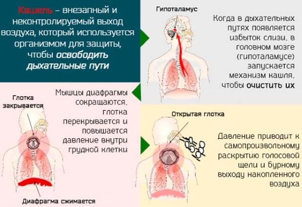 Стоптуссин от кашля. Инструкция по применению, цена, аналоги, отзывы