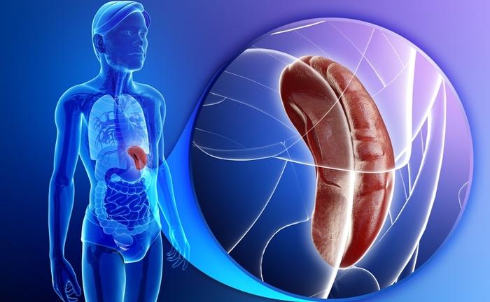 Норма тромбоцитов у мужчин по возрасту. Таблица, расшифровка анализа
