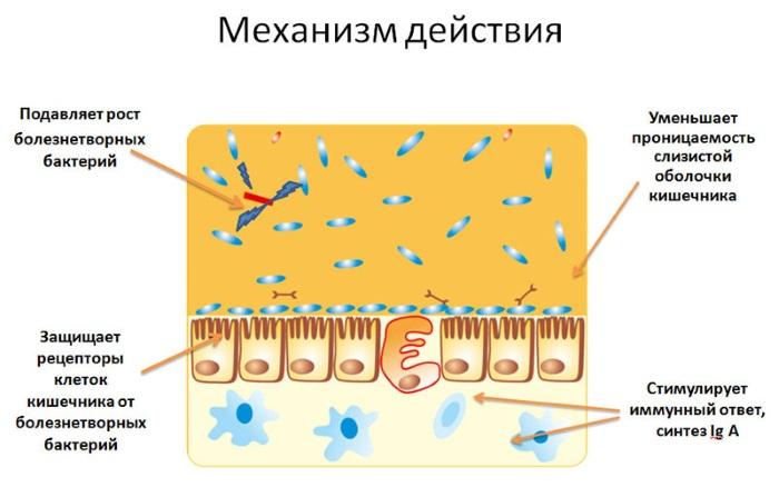 Полезные бактерии для человека для желудка и кишечника. Препараты. Названия, список, виды