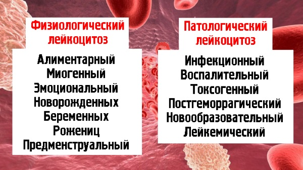 Повышенное содержание лейкоцитов в крови у мужчин, женщин, ребенка. Причины и что делать