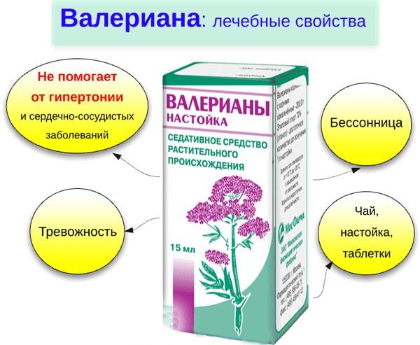 Валерьяна в таблетках, настойка. Полезные свойства, инструкция, как принимать. Противопоказания