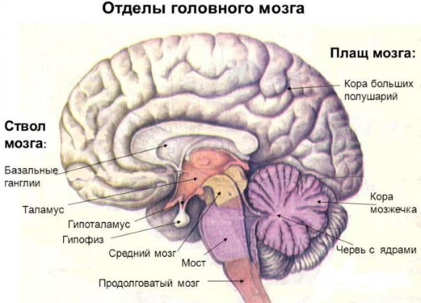 Гидроцефалия головного мозга у взрослых. Лечение, что такое заместительная, умеренная, внутренняя. Признаки