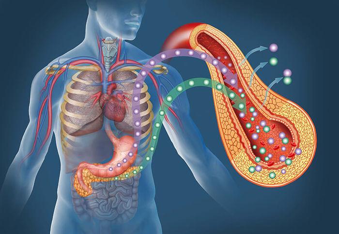 Инсулинорезистентность. Анализ на индекс, как сдавать, расшифровка, цена. Диета и лечение