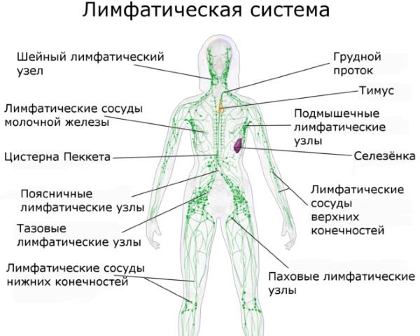 Как избавиться от отечности лица под глазами, тела, ног. Лекарства, народные средства