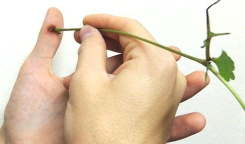 Лечение папиллом и бородавок на лице и теле народными средствами. Рецепты