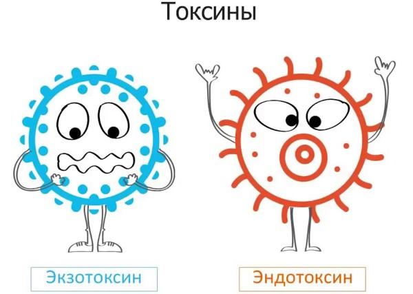 Выведение токсинов и шлаков из организма. Препараты, народные способы, рецепты очищения