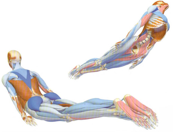 Болит копчик. Причины у женщин при сидении, когда встаешь, отдающая боль в ягодицу, ногу, пах. Лечение