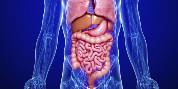 Физиология пищеварения человека кратко и понятно. Таблица органов и их функций