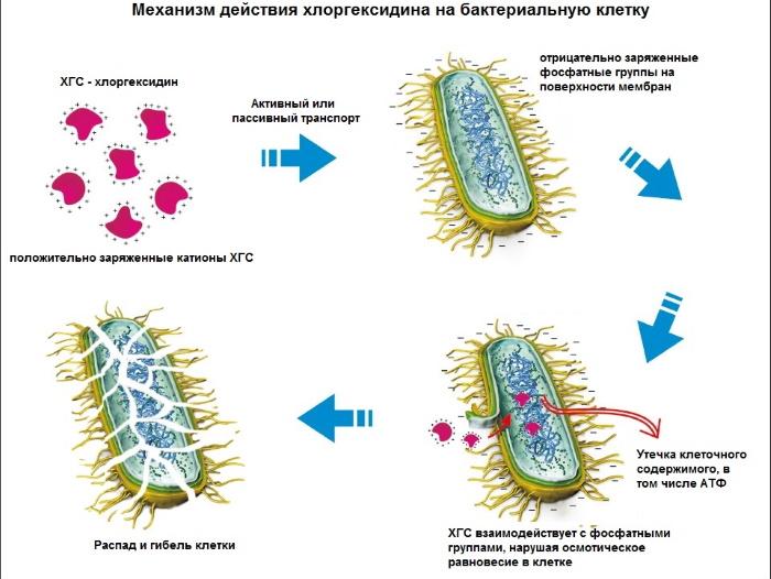 Хлоргексидин в нос при насморке, гайморите, аденоидах. Инструкция по применению для промывания ребенку, взрослому, при беременности