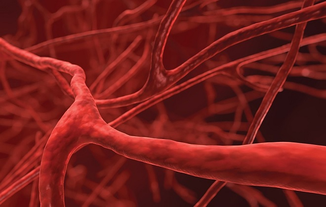 ukreplenie sosudov i kapillyarov 10 - Métodos de fortalecimiento vascular preparaciones recetas de vitaminas