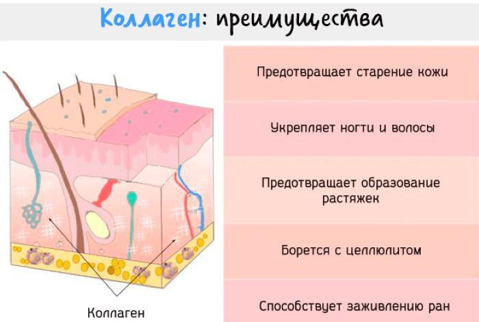 Коллаген в порошке. Как пить правильно, польза и вред применения, противопоказания