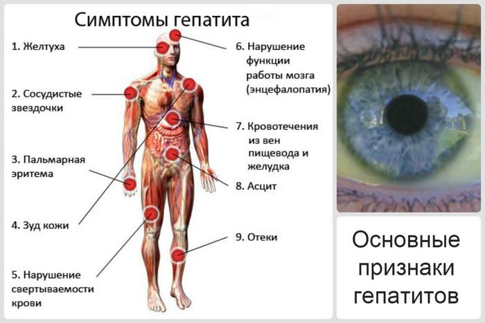 Лецитин. Польза и вред для организма, показания к применению, цена