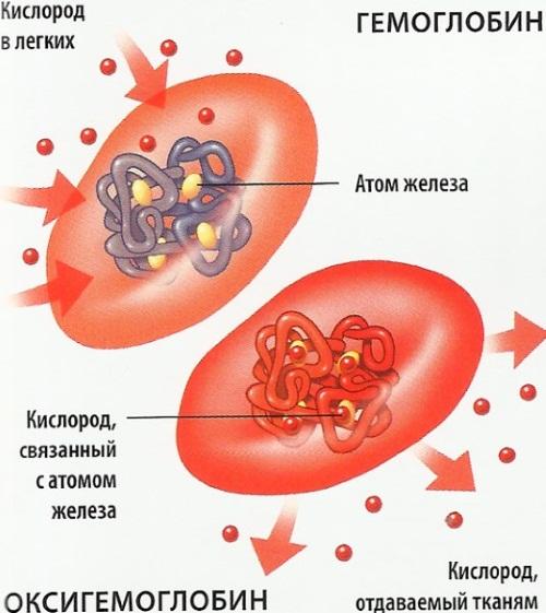 Общий анализ крови у детей. Норма по возрасту в таблице, подготовка, расшифровка