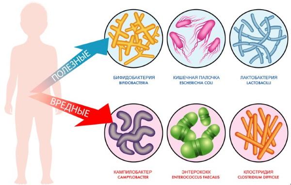 Анализ на чувствительность к бактериофагам, дисбактериоз кишечника. Расшифровка