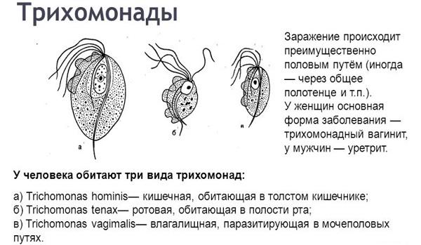 Боль при мочеиспускании у женщин в конце с кровью, жжение внизу живота. Причины, лечение