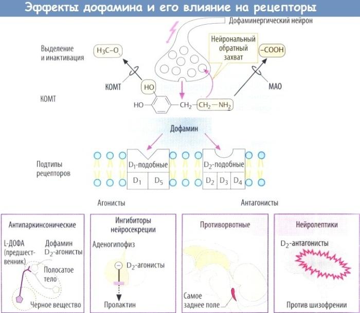 Дофамин и серотонин - гормоны в организме. Что это, блокаторы, симптомы дефицита, как повысить