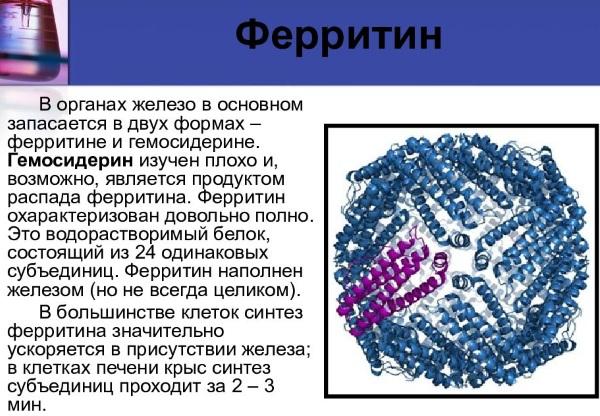 Ферритин в анализе крови. Что означает понижен, повышен у женщин, норма, причины и лечение
