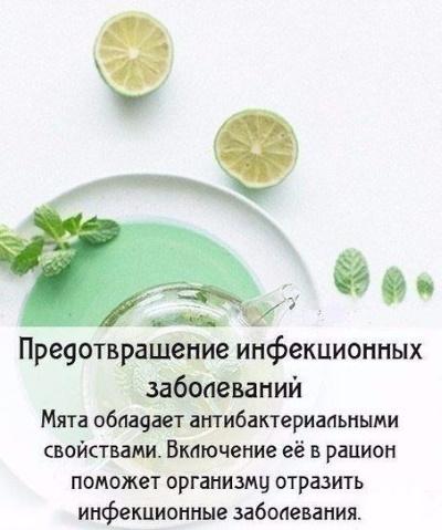 Мята перечная. Лечебные свойства для женщин, польза чая, рецепты народной медицины