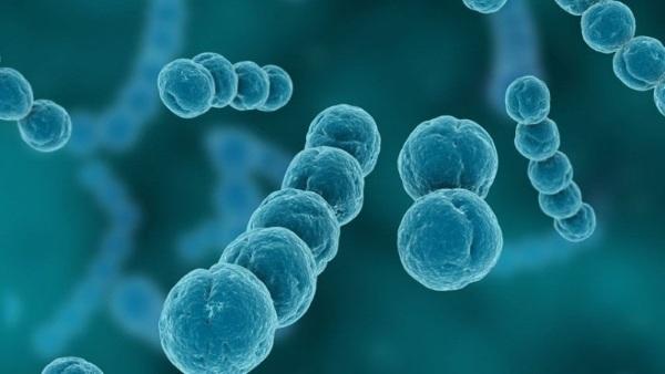 Антистрептолизин-О (АСЛ-О) повышен. Что это значит, причины, норма у детей, женщин, лечение