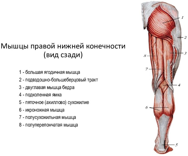 Болит и тянет под коленом сзади. Что это такое, чем лечить, к какому врачу обратиться