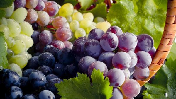 Виноград слабит или крепит стул взрослого, ребенка, при беременности, язве желудка. Как действует на кишечник
