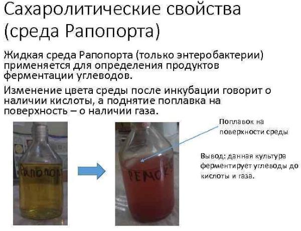 Анализ на кишечные инфекции у взрослых thumbnail
