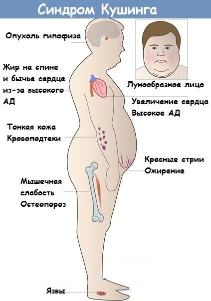 Эндокринолог. Что проверяет, что за врач, что лечит у взрослых, детей
