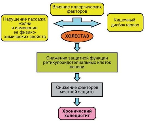 Хронический холецистит. Лечение, препараты, симптомы, рекомендации
