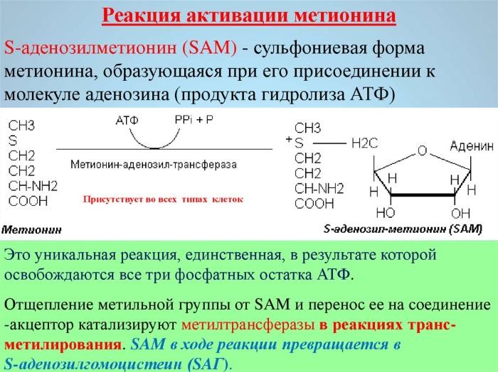 Метионин. Польза и вред для человека, печени, что это такое, в каких продуктах, для чего принимается в бодибилдинге. Цена, аналоги