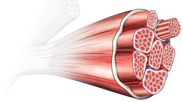 Миорелаксанты для снятия мышечных спазмов шеи, ног, спины, челюсти. Список лучших при остеохондрозе, грыже позвоночника