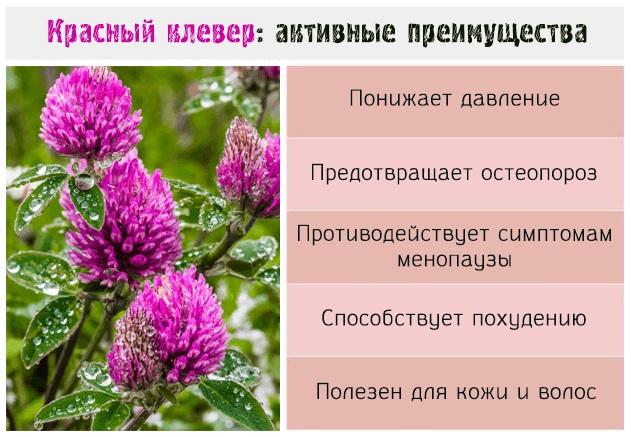 Травы при климаксе при приливах, потливости, народные средства