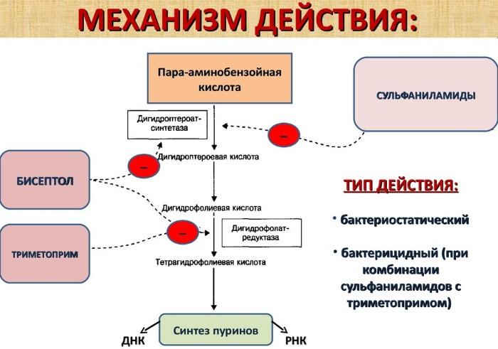 Бисептол (Biseptol). Показания к применению, инструкция, аналоги