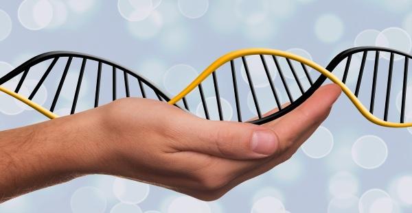 Генетический анализ на предрасположенность к болезням. Что это, кому делают, цена