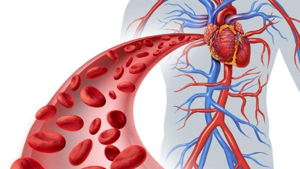 Лекарства для укрепления сосудов: стенок, вен головного мозга, сердца, носа, ног. Цены