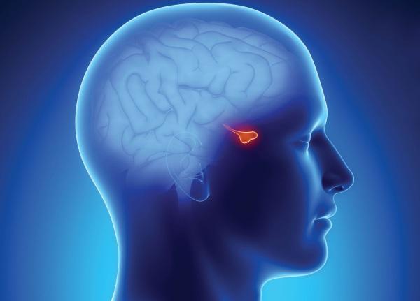 Пролактинома гипофиза. Симптомы у женщин, мужчин, причины, лечение