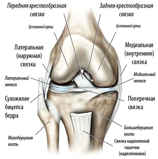 Как долго делают мрт коленного сустава