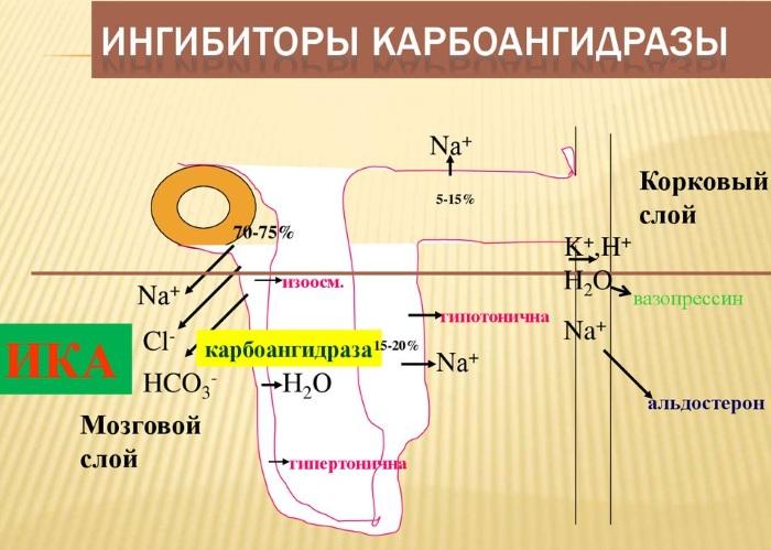 Дорзопт (Dorzopt) глазные капли. Цена, инструкция по применению, аналоги