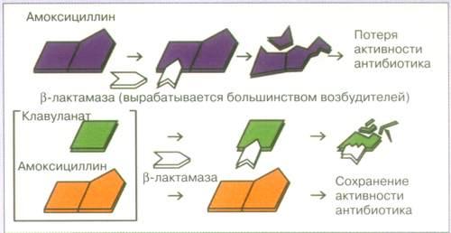Флемоклав Солютаб (Flemoсlav Solutab) 1000 мг. Цена, инструкция по применению, аналоги