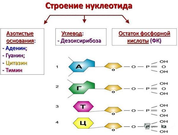 Гетерозиготная мутация. Что это такое, что значит при беременности, как лечить