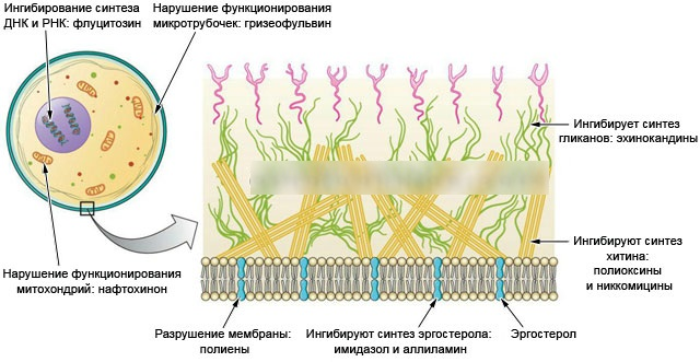Кандибиотик (Candibiotic) ушные капли. Цена, инструкция по применению, аналоги
