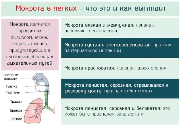 Белая мокрота при кашле у взрослых, ребенка, беременных с температурой и без, как лечить