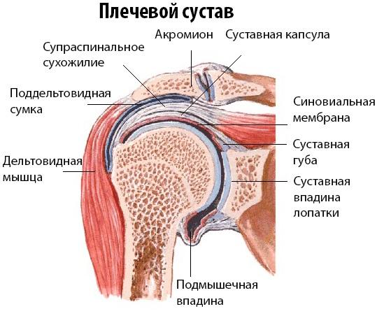 Синовит плечевого сустава операция thumbnail